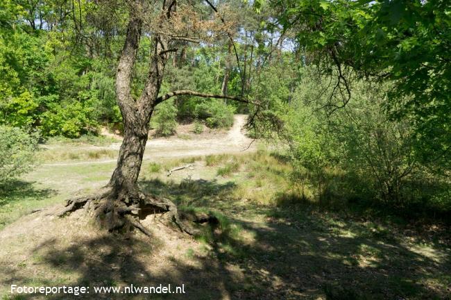 NS-wandeling Krickenbecker Seen