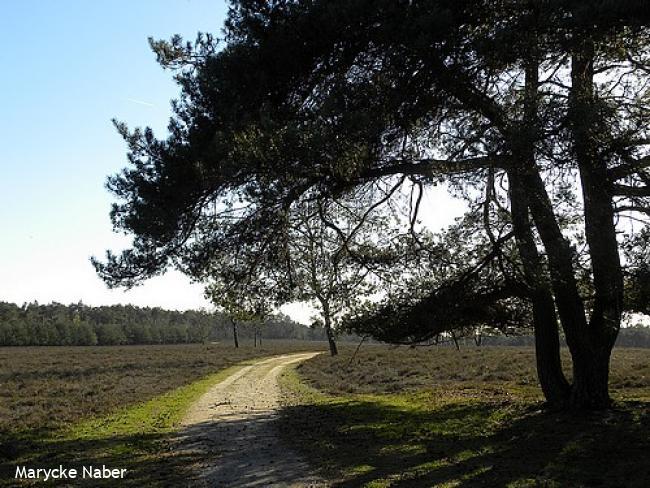 Wandelsporen Zwolle - Wezep