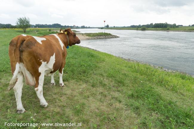 Groene Wissel Deventer