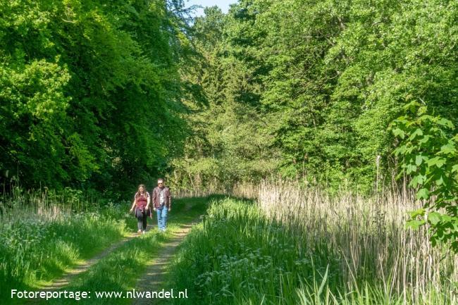 Groene Wissel Lelystad: Hollandse Hout
