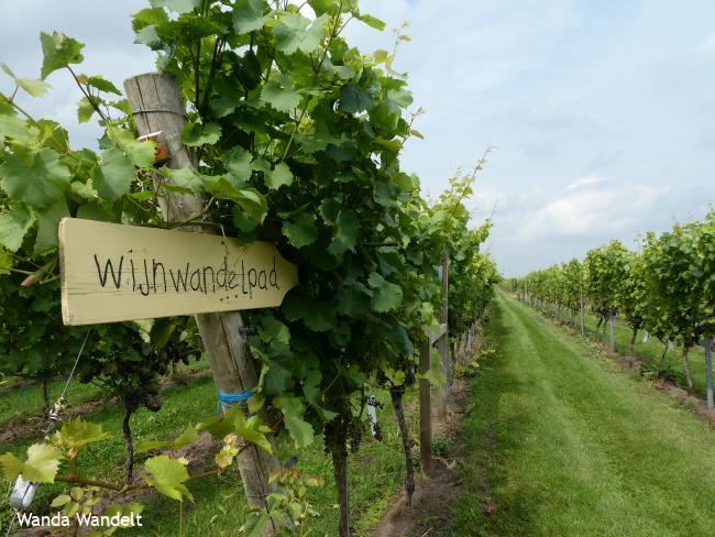 WijnWandeling Balkbrug