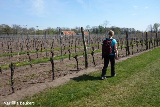 WijnWandeling Winterswijk