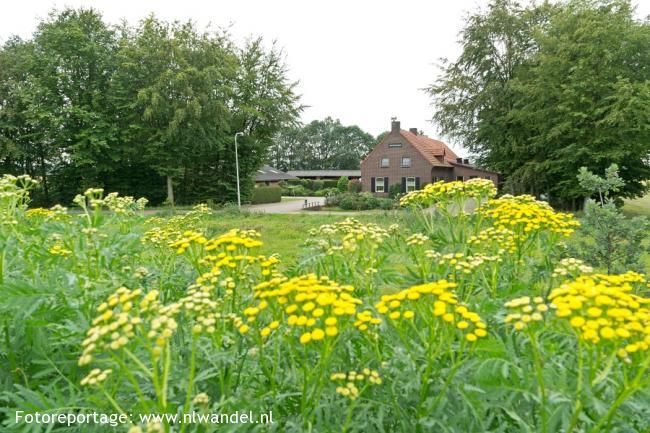 Groene Wissel Reuver