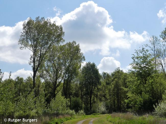 Trage Tocht Almere Hout