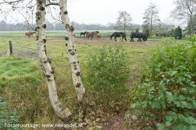 Groene Wissel Hardegarijp (Hurdegaryp)
