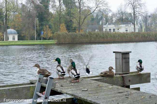 Groene Wissel Amsterdam-Amstel
