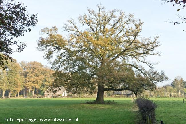 Groene Wissel Klarenbeek