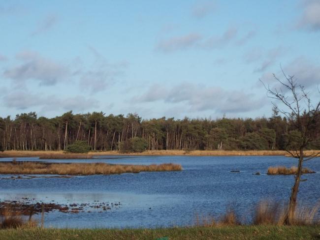 Ommetje Lieropse Heide