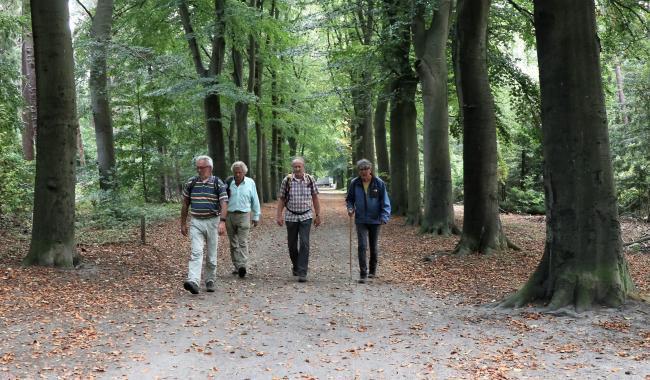 Door de bosgebieden in Tilburg-West
