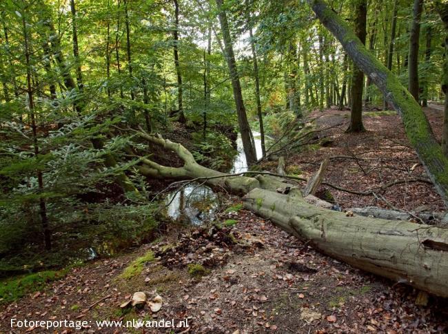 Etappe 2: Hulshorst - Leuvenum