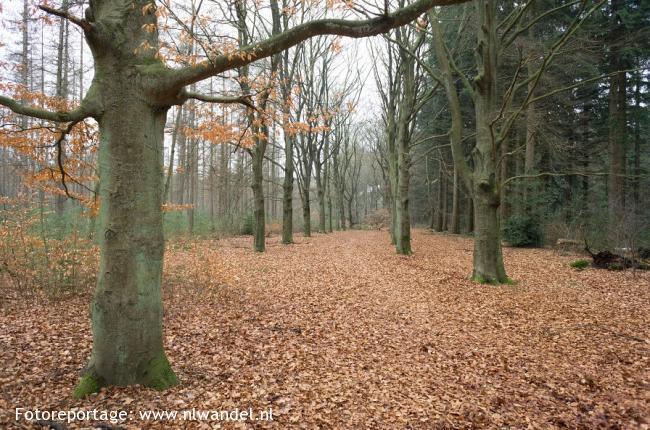 Franse Kamp en Spanderswoud