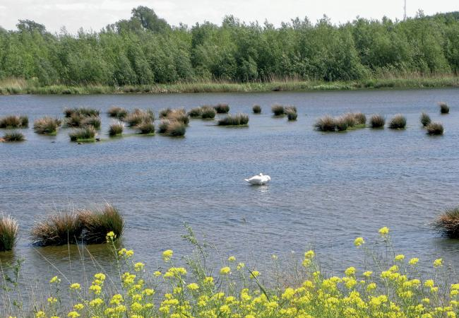 Biesbosch Noord-Brabant