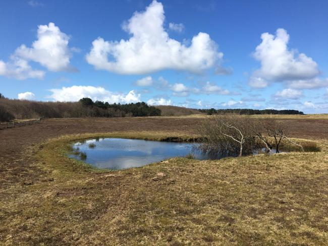 Boswachterspad Roosduinen en Landweerdijk