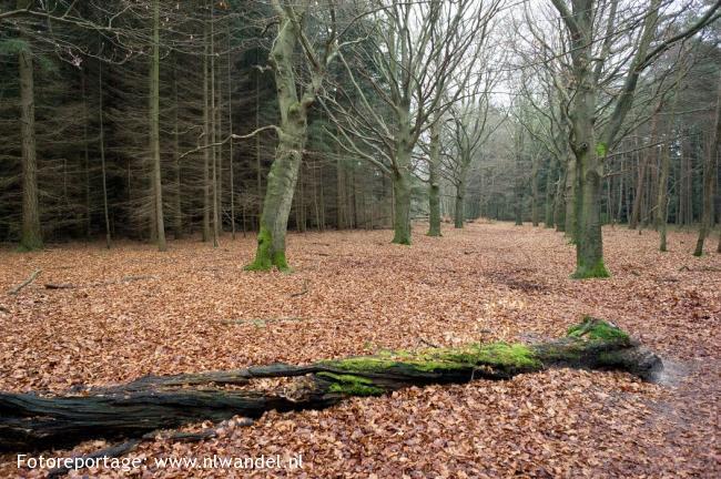 's Graveland - Huizen