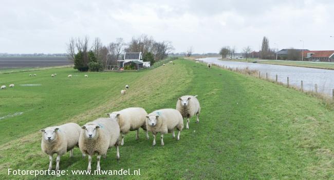 Groene Wissel Purmerend-Overwhere