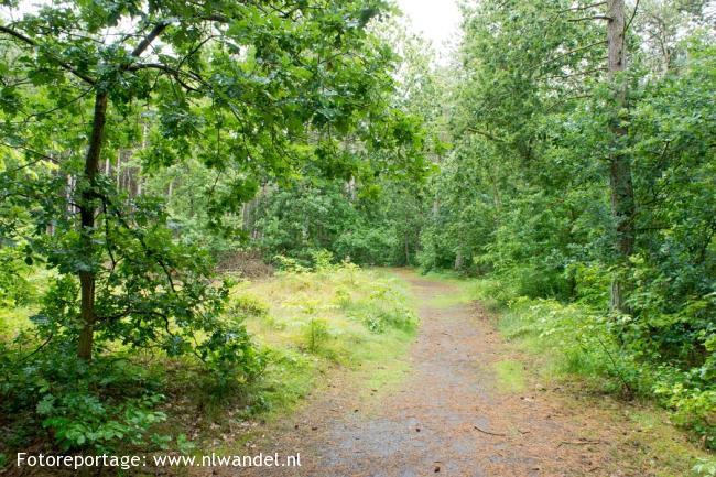 Groene Wissel Terschelling, Midsland