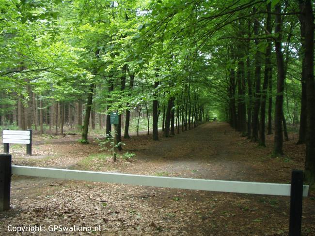 Grote Bos Doorn