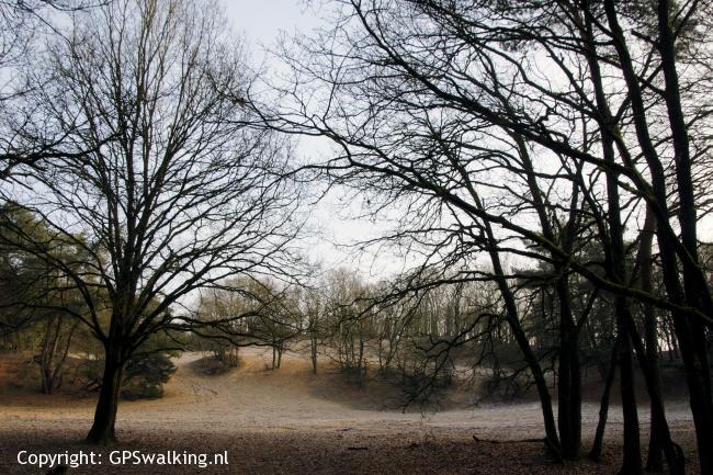 Heibloem Asbroeker Heide